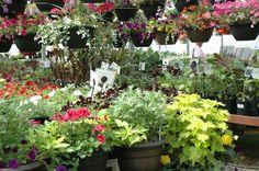 Greenhouse in full bloom!