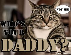 This is how we celebrate Father's Day in the spay/neuter world! Additionally, he'll never be a guest on the Maury Povich show -taking polygraphs and being attacked by hysterical female felines. Cat Quotes, Pet Care, Animal Rescue, Pet Adoption, Fur Babies, Dog Cat, Kitty, Signs, Female