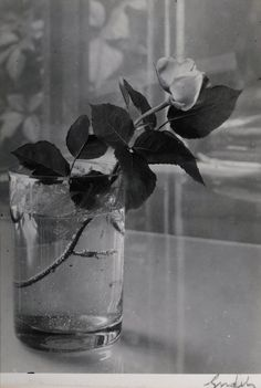 Josef Sudek, 1954