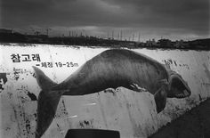 [추천전시회 2012-07-11 ~2012-07-24 갤러리룩스 김남효, 고래를 기다리며]    오늘의 추천 전시회는 갤러리룩스에서 열리는 김남효 작가의 '고래를 기다리며'입니다.    김남효 작가는 드러나지 않은 채 말하는 것, 말하지 않아도 드러나는   인간의 불안과 불안정을 담는 작가인데요.    이번 사진전 '고래를 기다리며'는   곧 인간이 희망하는 표상인 동시에 모든 기다림의 대상을 은유하고,  자신의 내면 깊숙한 곳에 자리한 불안으로부터 벗어나고픈   일종의 꿈틀거림을 나타낸다고 합니다.     '고래를 기다리며'는 결국 내 안에 존재하는 불안으로부터 벗어나고픈 상징으로  아름다운 시간의 흔적들을 통해 삶의 본질을 바라보고 알아보고 되돌아보는 시간이며 간절한 바램 같은 것이라고 하네요.  전시회에 대한 자세한 정보는 블로그세어 확인하세요.  http://blog.naver.com/fujifilm_x/150142908589