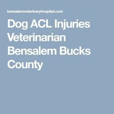 Dog ACL Injuries Veterinarian Bensalem Bucks County