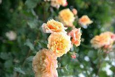 rozen stekken doe je zo...handige info
