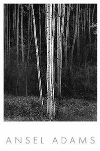 Aspens, New Mexico (V) by Ansel Adams