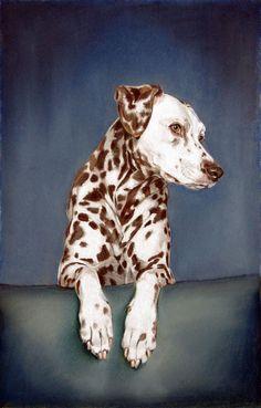 Dog art by Amy Little,  Bobbie, 2013,  Pastel Pencil on paper