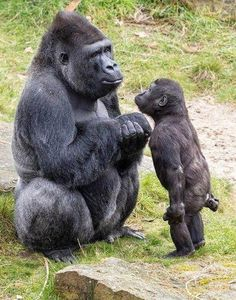 Mommy why can't i go? You're not old enough but everybody else is going - Tier - tierbabys Nature Animals, Animals And Pets, Strange Animals, Wildlife Nature, Wild Animals, Beautiful Creatures, Animals Beautiful, Cute Baby Animals, Funny Animals