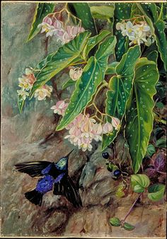 Kew: Marianne North Gallery: Painting 81: Brazilian Flowers
