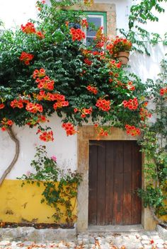 House in Obidos, Portugal Wish I could replicate this in a retirement home! In Texas --- somewhat of a stretch! House in Obidos, Portugal Wish I could replicate this in a retirement home! In Texas --- somewhat of a stretch! Fachada Colonial, Old Doors, Garden Landscaping, Garden Design, Beautiful Places, Scenery, Around The Worlds, Backyard, Outdoor