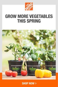 Take care of your vegetable and herb garden all season long with the right tools and products. Explore our top plant care variety and gardening accessories to prepare for the most bountiful harvest yet. Tap to browse a wide selection of fertilizers and more at The Home Depot. Garden Club, Herb Garden, Gardening Supplies, Gardening Tips, Garden Solutions, Bountiful Harvest, Healthy Vegetables, Garden Accessories, Plant Care
