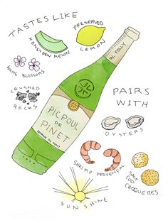 "Picpoul means ""lip stinger"" and is just one of the intriguing white wines from the Languedoc-Roussillon region of France. Sauvignon Blanc, Cabernet Sauvignon, Chenin Blanc, Pinot Noir, French White Wines, Wine Folly, Wine Education, Wine Guide, In Vino Veritas"