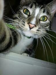 Cat selfie from Google