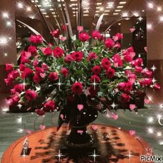 The perfect Red Roses Flying Animated GIF for your conversation. Discover and Share the best GIFs on Tenor. Roses Gif, Flowers Gif, Beautiful Gif, Beautiful Flowers, Gifs, I Love You Husband, Happy Birthday Flower, Christmas Wreaths, Christmas Tree