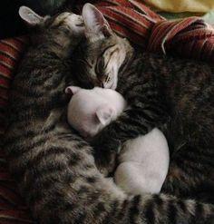 Filhote de cachorro sem uma pata e rejeitado pela mãe é adotado por gatos e tem seu final feliz.