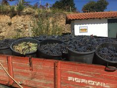 Wine harvest Portugal at Bed and Breakfast Quinta da Cumieira