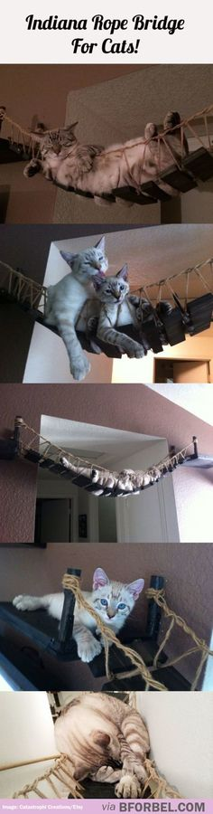 Indiana Jones Rope Bridge For Cats… They'll Totes Love It!
