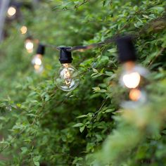 Patio Lights With In-Line Sockets