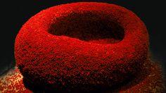 Google Bilder-resultat for http://blog.sarahpacini.com/wp-content/uploads/2011/10/DanielOst.jpg