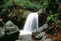 Grotto Falls & *info on other Waterfalls in Great Smokey Mountains