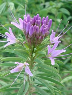 42 Best Wild Flower Garden Plants For Hill Images Flower Garden