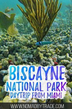 Apr 2019 - Biscayne National Park snorkeling is some of the best in the United States. This guid is full of tips and booking info, including what to pack. Florida Usa, South Florida, Biscayne National Park, Dry Tortugas, Best Snorkeling, What To Pack, East Coast, Day Trips, Places To Go