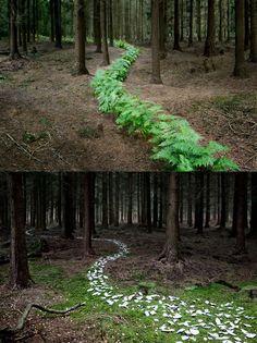 Ellie Davies: Into the Woods 5 October – 17 November 2012.