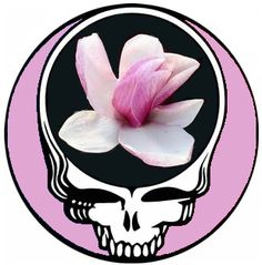 "Sugarmag's Sugar Magnolia Grateful Dead Steal Your Face (larger size) - ""Sugar Magnolia, blossoms blooming. Heads all empty and I don't care."" My song! Grateful Dead Image, Magnolia Tattoo, When I Dream, Forever Grateful, Flowers Nature, Me Me Me Song, Amethyst Stone, Cool Bands, Painted Rocks"