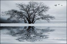 Winter Flight by IgorLaptev.deviantart.com on @deviantART