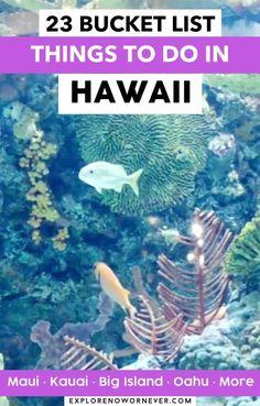 Hawaii Travel Guide, Maui Travel, Mexico Travel, Canada Travel, Travel Usa, Best Maui Resorts, Vacation Trips, Vacation Ideas, New Zealand Adventure