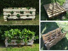 ShareMake an original DIY strawberry pallet planter with this DIY craft project. Put your creativity to work, improve your beautiful garden design and make a trendy wooden pallet planter. Also, what is best about this DIY idea is that is pretty cheap so you won't have to spend a lot of money. At first sight …