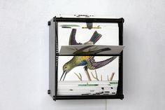Hand-Illustrated Bird Flipbook Machines by Juan Fontanive