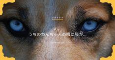 老犬の瞬膜が戻らない…目になんか膜があるんだけど!?これってなに!? - いぬのみみ Dogs, Pet Dogs, Doggies, Dog