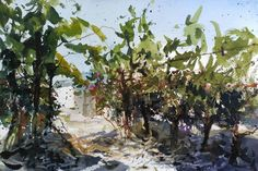 Pedro Orozco Tristán Stuck in the vineyards Watercolor Artists, Artist Painting, Makes Me Wonder, Tuscany, Landscape Paintings, Vineyard, Lavender, Coins, Sketch