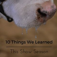 10 Things we learned this stock show season