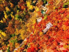 With sugary cinnamon stuffed pancakes, harvest bounty, toasty drinks, cheeky mountains and near-neon autumnal hues, the South Korea autumn just won at life. Autumn In Korea, Color Television, Yellow Tree, Jeju Island, Hidden Beach, Travel Pictures, Travel Pics, Photo Essay, Fall Photos