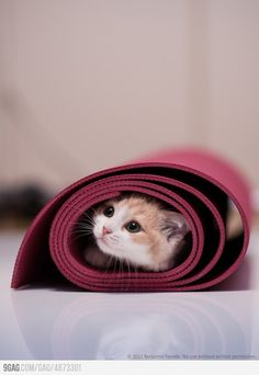How to Do Yoga With Your Cat Yoga mats draw cats like moths to flame, but there are ways you can still get your yoga in. Learn the safe way to do yoga with your cat. Kittens Cutest, Cats And Kittens, Cute Cats, Funny Cats, Crazy Cat Lady, Crazy Cats, Yoga Gato, Baby Animals, Cute Animals