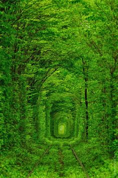 Tunnel of Love in Ukraine | Places To See In Your Lifetime