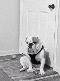 Bane. Bulldog.