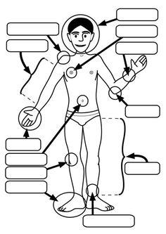 Målarbild kroppsdelar. Barn lär sg om kroppsdelar medan de färglägger| Bilder som kan användas i skolan - Bild 26927.