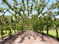Fruit tree arch-I am SO doing this