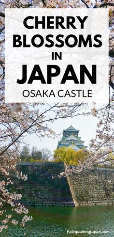 castle with cherry blossoms, park. things to do in osaka castle to see cherry blossoms Japan Travel Tips, Asia Travel, Nara, Tahiti, Kyoto, Where Is Bora Bora, Famous Places In France, Osaka Castle, Hotels