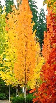 Autumn colors. I cal share moments