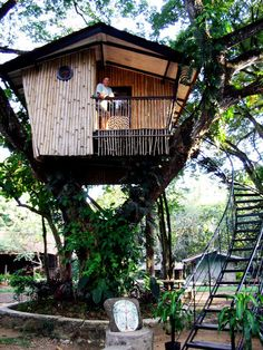 The icon of the Zamboanga city in Philippines is the Pasonanca Park. In the office of the Mayor, tourists can obtain a permission to spend a night in the tree house for free. Beautiful Tree Houses, Cool Tree Houses, Bamboo House, Bamboo Tree, Zamboanga City, Modern Tree House, Tree House Designs, Tree Tops, In The Tree