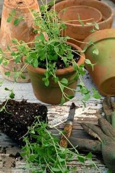 The Best Ways To Take Care Of A Potted Herb Garden