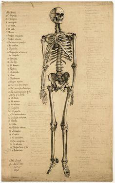 skeleton.