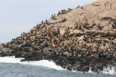 Islas Palomino, Lima - Hogar de Lobos marinos y aves migratorias