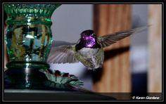 Lighted Hummingbird Feeders | Hummer Hello