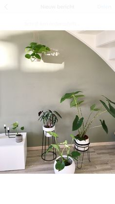 Plantjes, gezellig hoekje, alocasia, kamerplant, monstera, camouflagegreen, flexa, intrieur Dream Rooms, Houseplants, Planting Flowers, New Homes, Yard, Patio, Living Room, Deco, Trends 2018