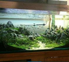 Nice nature aquarium setup, but the heater and filter tubes detract from it.