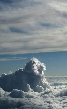 Lion of clouds in the sky. Lion of Judah. Cool Pictures, Cool Photos, Beautiful Pictures, Beautiful World, Beautiful Places, King Of The World, Lion Of Judah, Lion King Art, Lion Art