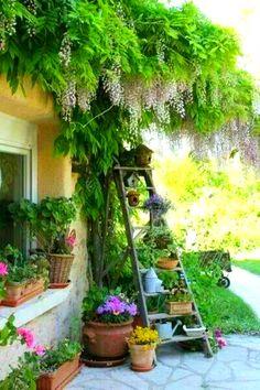 Ladder in the garden ... so scenic.