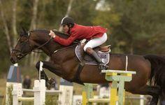 Les chevaux de sports - Diamant de Semilly - Diamant de Semilly en compétition